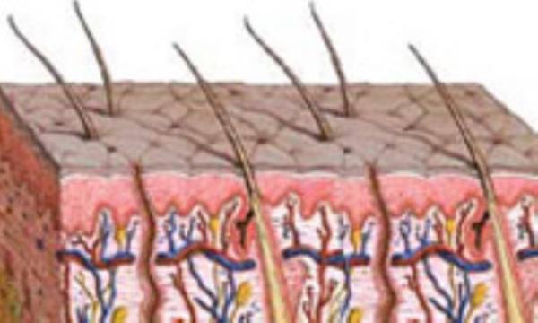 احیای پوست، ابقای سلامت